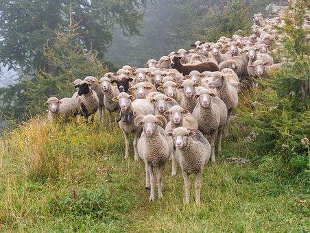 Um Himmels Willen – Herdenimmunität